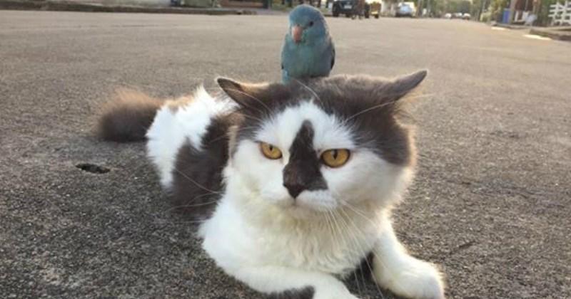 list birds cute Cats Video - 1845509