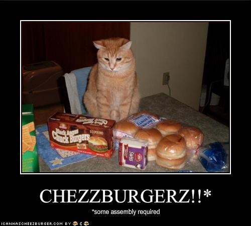 Cheezburger Image 1850082048