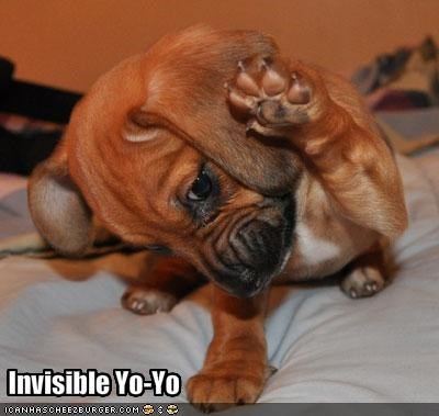 beagle,invisible,yo yo