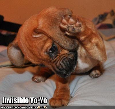 beagle invisible yo yo - 1851428096