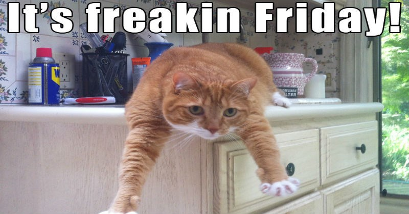 animal memes that are thank god it's friday and they show it