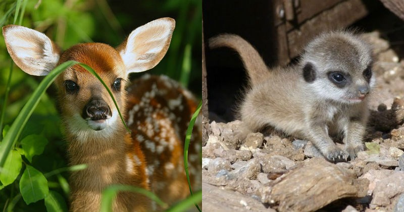 aww Babies baby cute squee animals