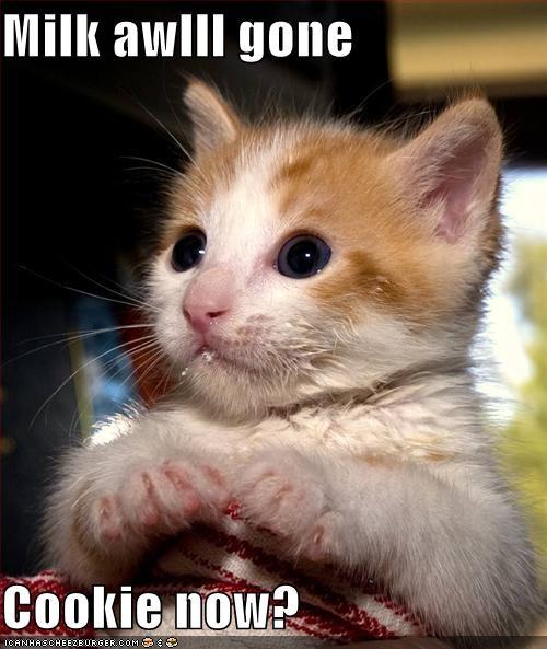 cookies fud hungry kitten milk nom nom nom - 1854142208