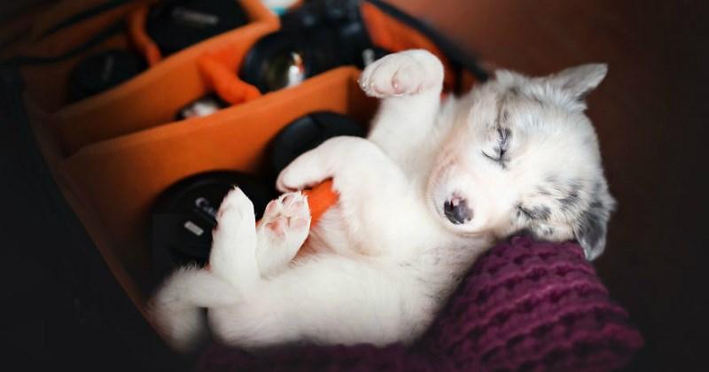 puppy cute camera - 1854213