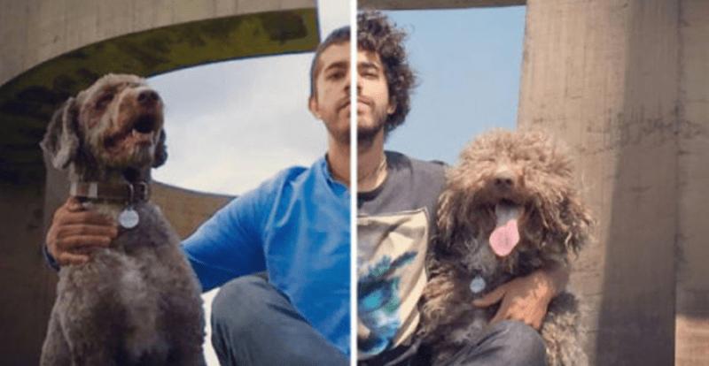 perros,curiosidades,listas,animales,fotos
