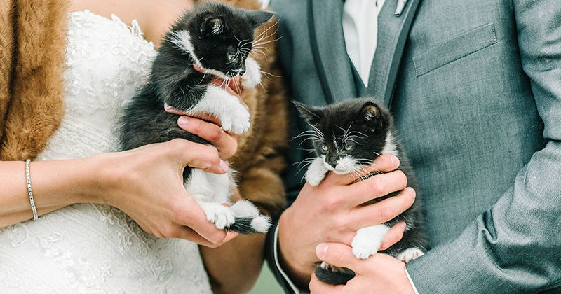 photography kitten wedding Cats married veterinarian - 1856773