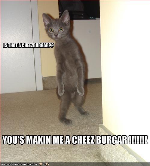 Cheezburger Image 1857093888