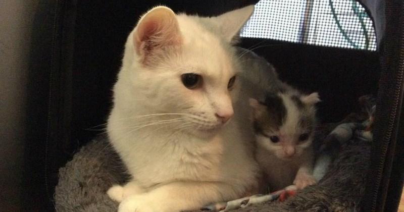 adoption list cute Cats - 1858053