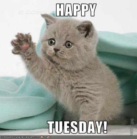 Image result for funny happy tuesday pics