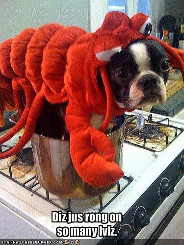 boston terrier cooking costume food googly eyes lobster