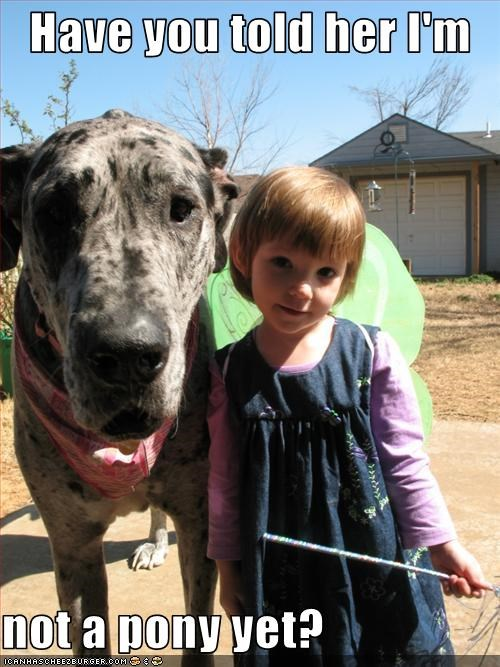 big Gentle Giant great dane outdoors pony