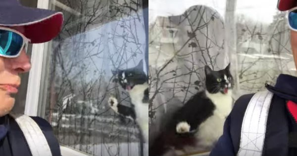 pets attack mailman postal service Cats