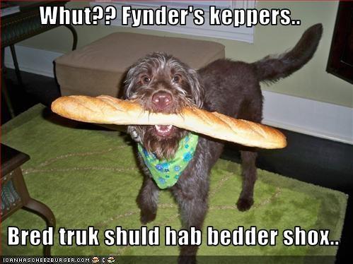 Cheezburger Image 1860237056