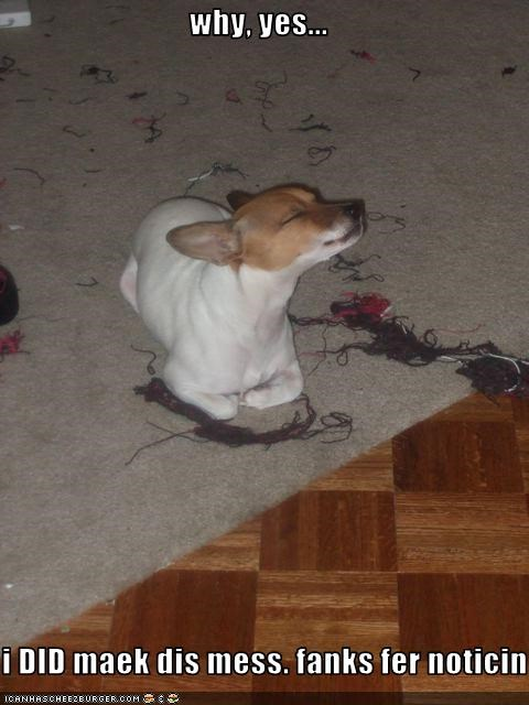 carpet destruction jack russel terrier mess - 1861590272