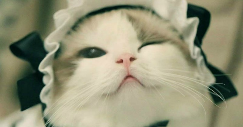 cute Cats funny - 1861637