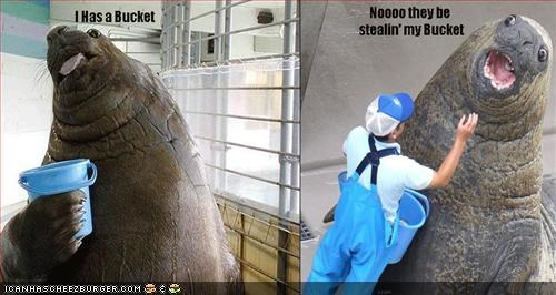 Funny pictures of a walrus statue with a bucket for a cup, and a person trying to take it away.