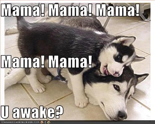 annoying kids malamute mom parents - 1864090368