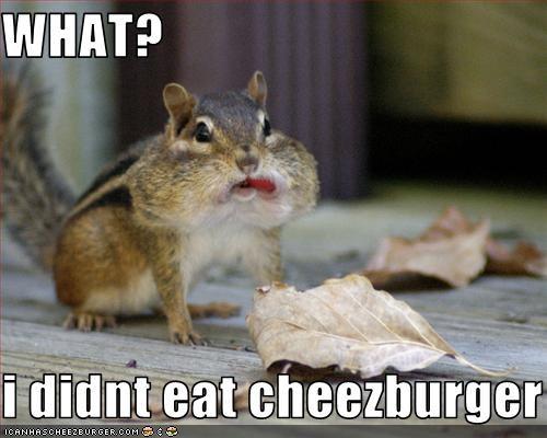 Cheezburger Image 1864459008