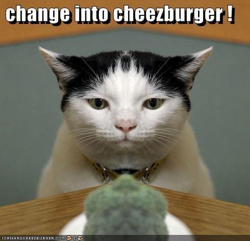 Cheezburger Image 1866940672