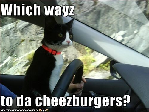 Cheezburger Image 1867064576