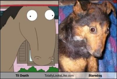 Til Death Totally Looks Like Staredog