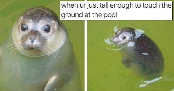 Memes,funny,animals