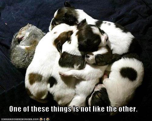 baby jack russel terrier like litter lolsquirrels sleeping - 1868978432