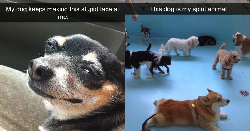 snapchat dogs being funny