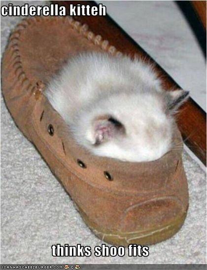 cinderella kitteh  thinks shoo fits