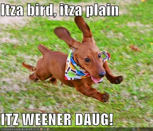 Cheezburger Image 1871646464