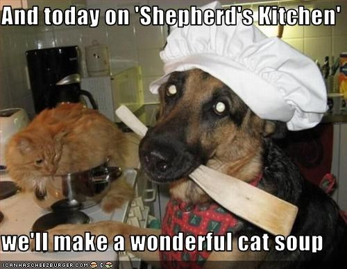 cooking,food,german shepherd,hat,kitchen,lolcats,oven