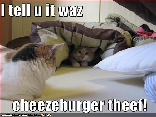 Cheezburger Image 1873405184
