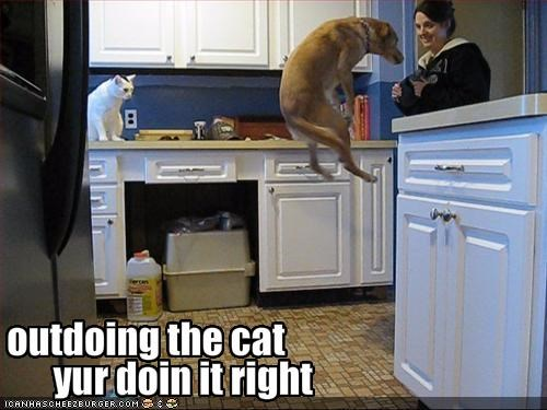 doing it right jumping kitchen lolcats whatbreed - 1874987776