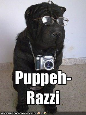 Puppeh-Razzi