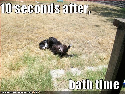 bath dirty grass outdoors rolling time whatbreed - 1875787008