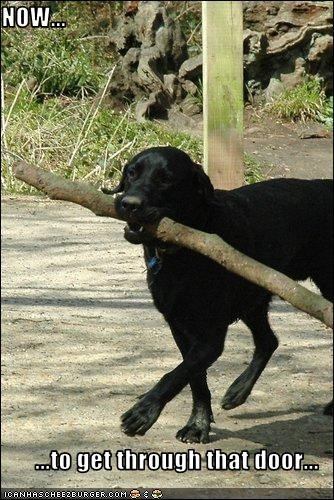 black door labrador outdoors stick - 1875964672