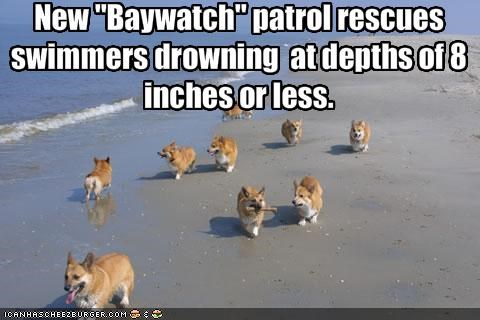 beach drowning rescue swimming welsh corgi