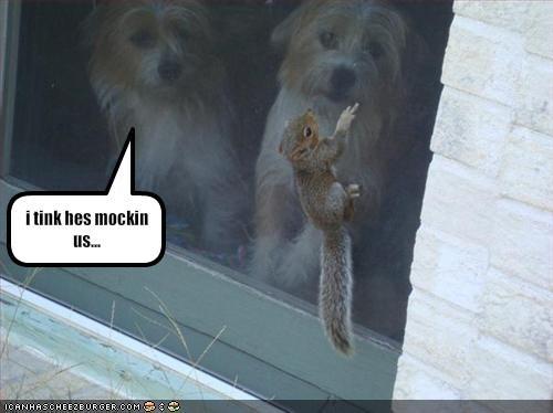 door lolsquirrels screen whatbreed
