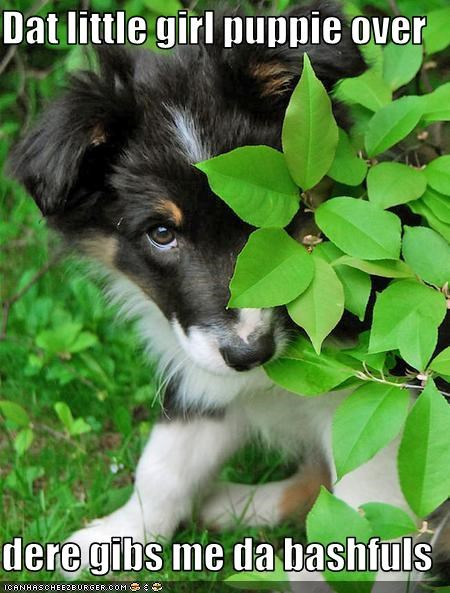 bashful border collie dating girl little puppy shy