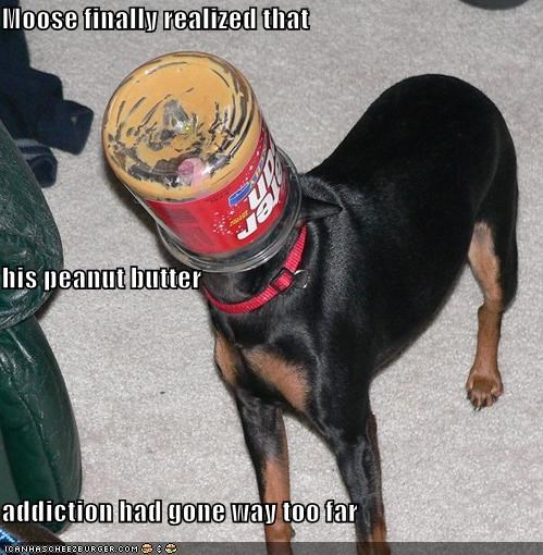 addiction,carpet,doberman pinscher,eating,FAIL,food,indoors,jars,peanut butter