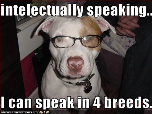 glasses,intellectual,language,pitbull,smart,speak