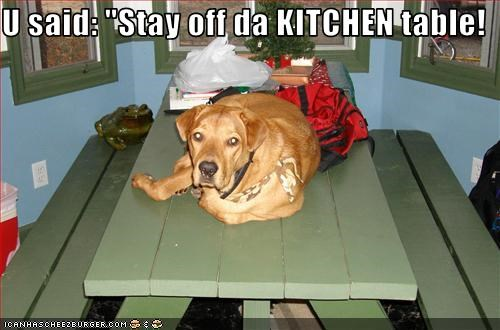 bad dog,kitchen,off,picnic,table,whatbreed