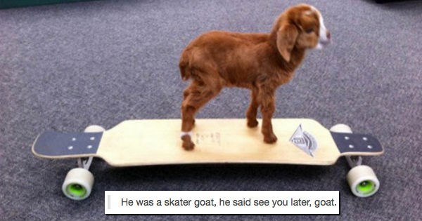 Funny animals posts from Tumblr that are hilarious.