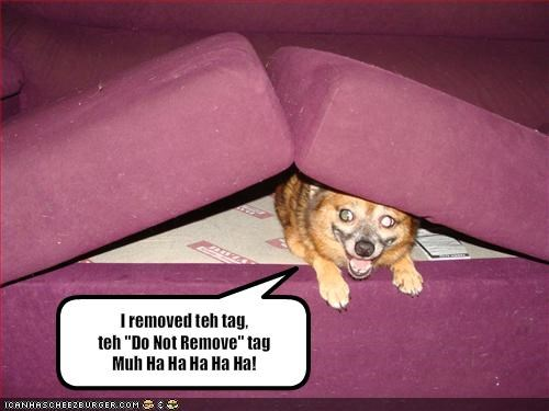 bad dog,couch,cushions,evil,whatbreed