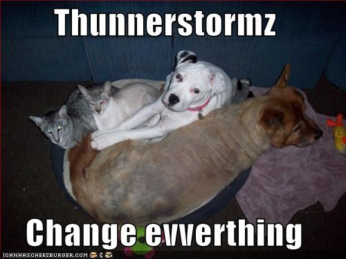 friends,loldogs,scared,storm