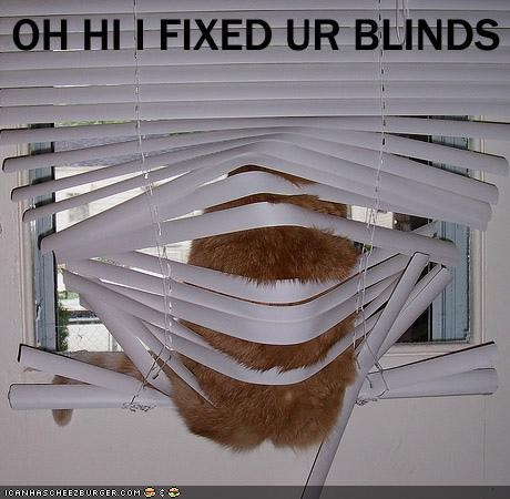 blinds fat fixed Hall of Fame lolcat ohhi - 1885891328