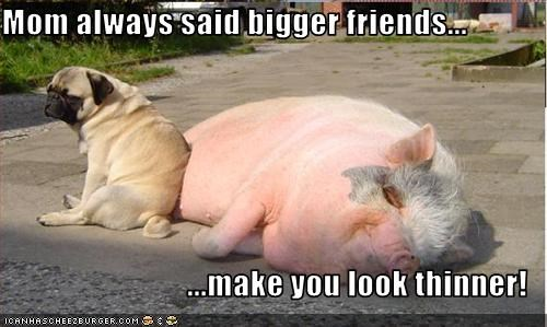 big,fat,friends,lolpigs,outdoors,pug