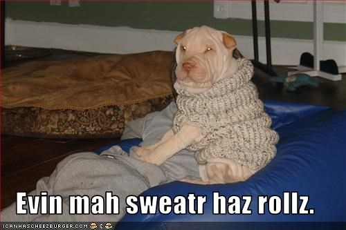 chair,clothing,Pillow,shar pei,sweater,wrinkles