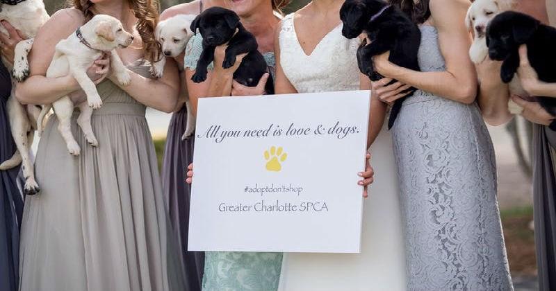 dogs bridesmaids puppy wedding - 1889541