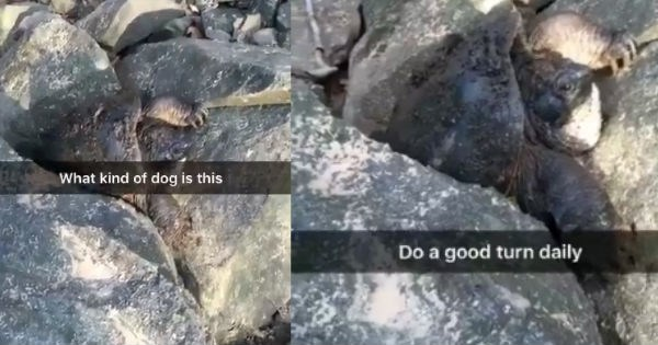 snapchat social media turtle Video win - 1889797